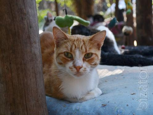 Is given in good hands red cat of Banderas