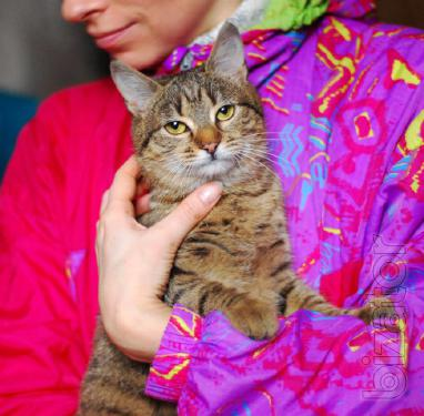 Is given in good hands kitty color tabby Klepa