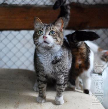 Is given in good hands gentle and well-bred cat Taisha