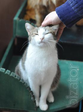 Is given in good hands cat-polosochka Nura