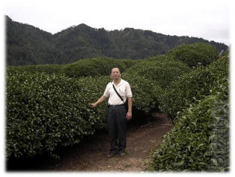 Tea plantation in Tibet.Tibemed
