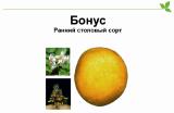 Potatoes Bonus