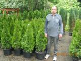 Thuja Smaragd 100-120 cm Landscaping landscaping Kiev.