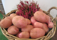 Sell potatoes to store for the winter!