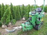 Thuja occidentalis Smaragd 1.7 to 1.8 m Thuja Kiev to buy.