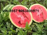 will sell seeds arbiza,pumpkins,melons, equipment for drying