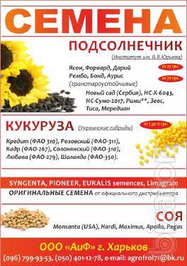 Ukrainian seed hybrid corn