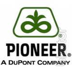 We offer sunflower seeds pioneer PRA and PRF (F50). 154 $ /p. about