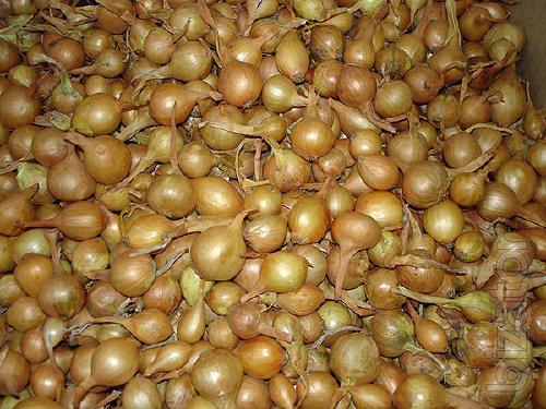 Sell onion (arbic)
