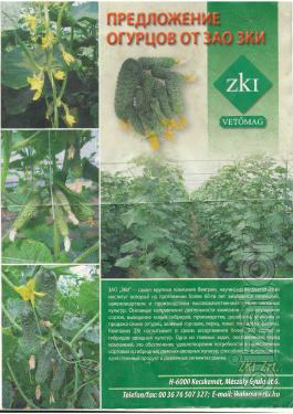 Will sell the seeds of cucumbers Hungarian breeding