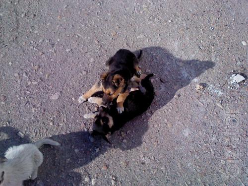 Give the puppies are in good hands!