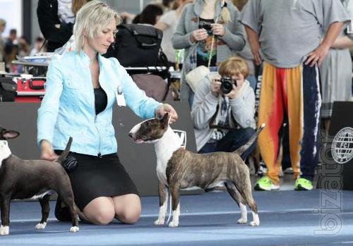 Puppies Mini Bulky . Kiev
