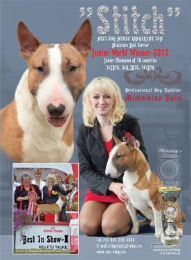 Offers prodaja puppies Miniature Belterra.