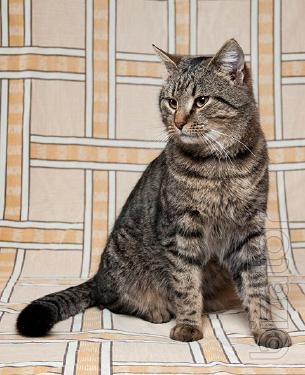 Looking to a big handsome cat Radar