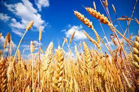 Buy wheat, corn, soybean, sunflower. On a constant basis!