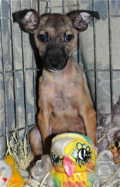Little Simochka is waiting for a family!