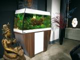 Pet shop aquamarine offers aquarium fish and plants!