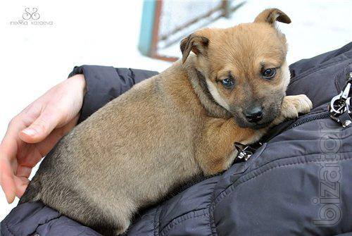 The most fascinating and provocative 1.5 months puppies are looking for a caring owners.