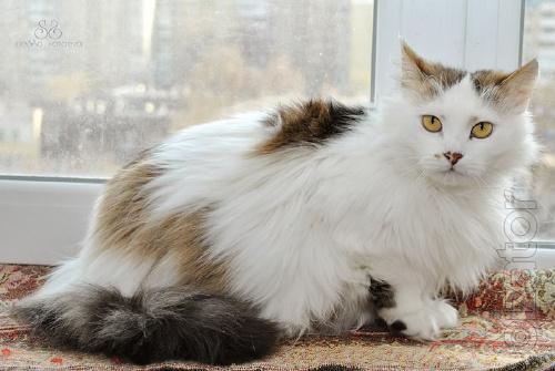 Fiona - fluffy, noble lady.