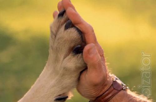 Dog with problem behavior