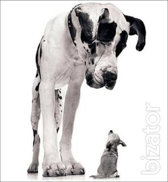 Consultation of zoopsychology on the behavior and psychology of dogs
