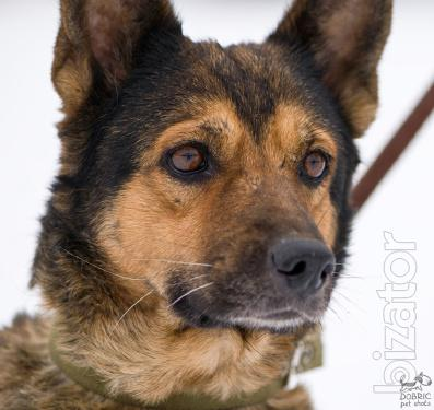 Good 10-year-old March, looking for a loving family