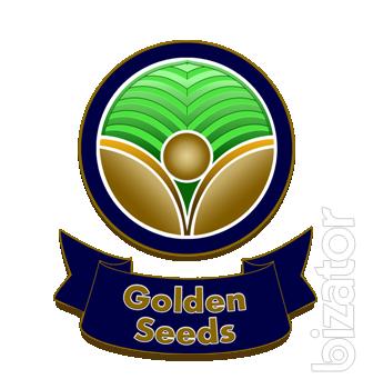 High-Yielding Seeds,Hybrids Of Sunflower,Maize.