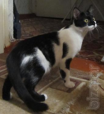 CIO-CIO-San kitty looking for a new home