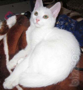 Seymour white cat that needs a home.
