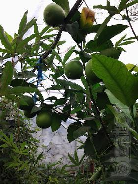 seedlings of exotic plants