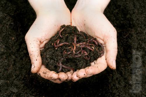 Waste food waste industrial waste food waste