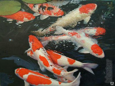 Buy Koi Fish Fish For A Pond Wholesale Manufacturer Farm Koi Buy Sell Feng Shui Pond Lake