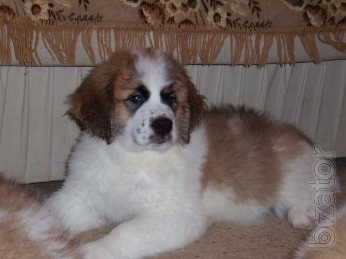 Juicy! In connection with the move will give for a nominal fee puppy!