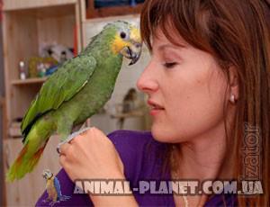 Manual Amazon parrot Venezuelan - fully manual Chicks lycormas