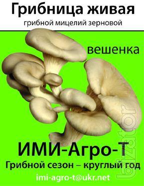 the mushroom mycelium