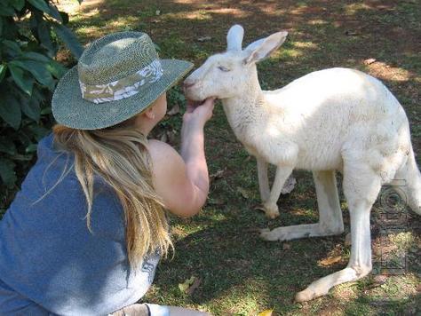 Alpacas, Kangaroos, Deer, Llama, Deer, fallow Deer, Ponies you can buy from us, Buy