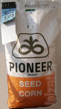 Seeds of maize, pioneer hybrid (Pioneer)