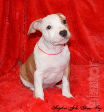 Little beauty Astatic girl red white
