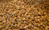 Will sell seeds: maize, millet, buckwheat.