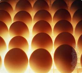 Egg to buy. Egg wholesale. Buy eggs in bulk. Chicken eggs by the gross. Free shipping. From the manufacturer