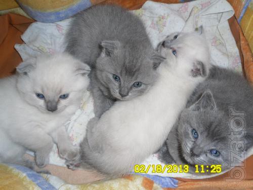 Will sell kittens!!!