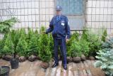 Arborvitae, thuja Kiev to buy, thuja price, thuja emerald 100-120 cm?, hedges