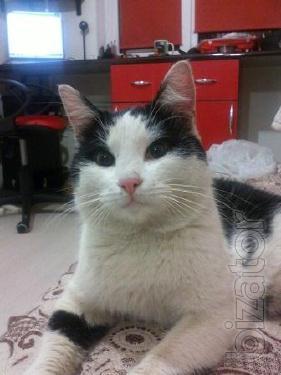 Give handsome cat Boris in good hands