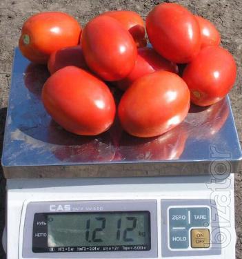 Will sell seedlings