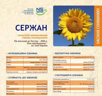 Seeds podsolnechnika Srdjan