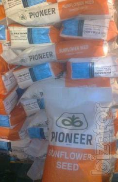 Sale of sunflower seeds pioneer