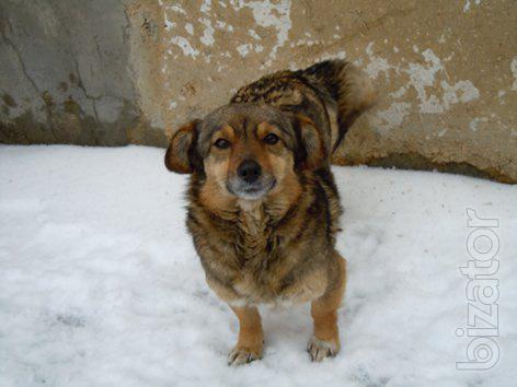 Dolly little (5 kg) modest dog