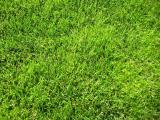 Grass seed grass seed, tested, 15% discount on the remains