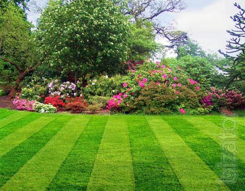 Will sell a mixture of turf grass seed
