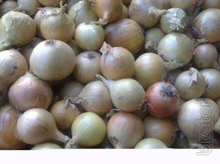 We offer seeds Dutch onions